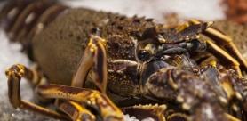 Морские деликатесы в ресторане «Птицы и Пчёлы»