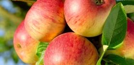 Кефирно-яблочная диета. Меню, результаты, отзывы.